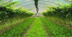 农业现代化气象传感器的应用